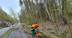 Die Feuerwehr Maschen musste diesen umgestürzten Baum in der Maschener Schützenstraße in Maschen beseitigen Foto: Pressesprecher Feuerwehr Maschen n